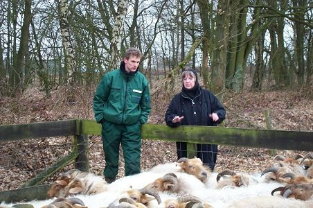 Inspecting sheep on a very cold day in February