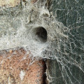 Spiders and Spider Webs - Photos
