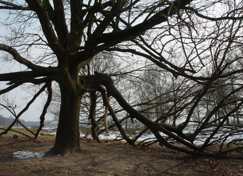 As I recall this was a beech tree