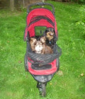 Why You Should Get A Pet Gear Dog Stroller