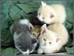 A kitten care guide will make your experience much more enjoyable