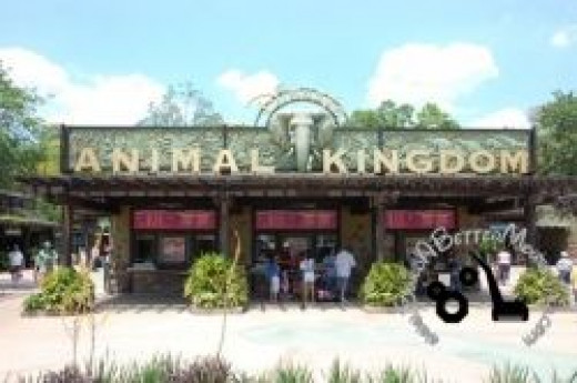 Entrace of Animal Kingdom Theme Park