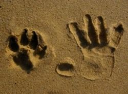 Paw Print and Hand Print
