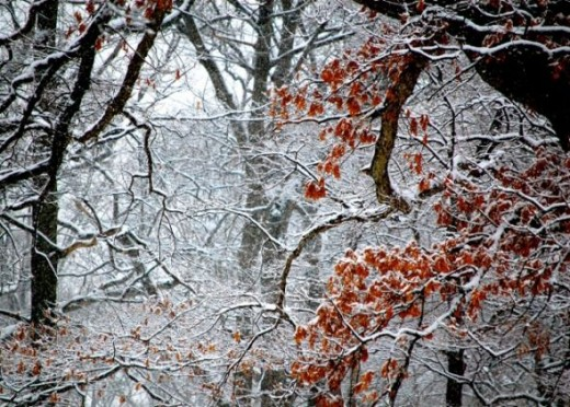 I love the look of this picture.  The woods are covered in snow, but there's still a beautiful splash of color.
