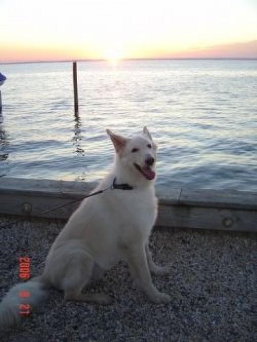 My Dog At The Bay