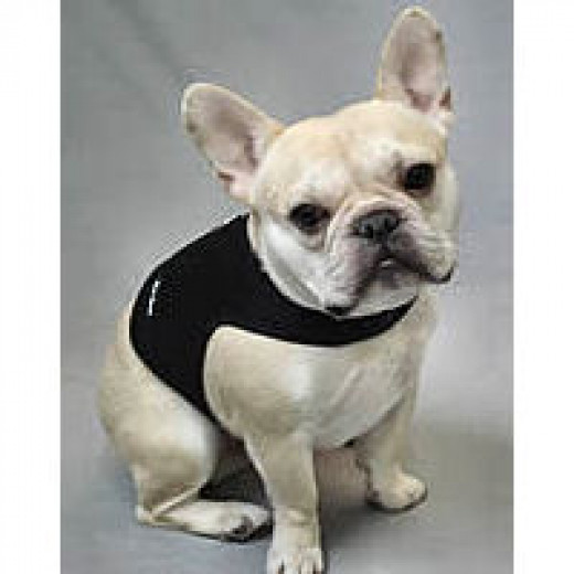 Teddy (French Bulldog) in the black mesh.