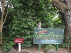 Visit and Sample Delicious Macadamias at the Tropical Farms