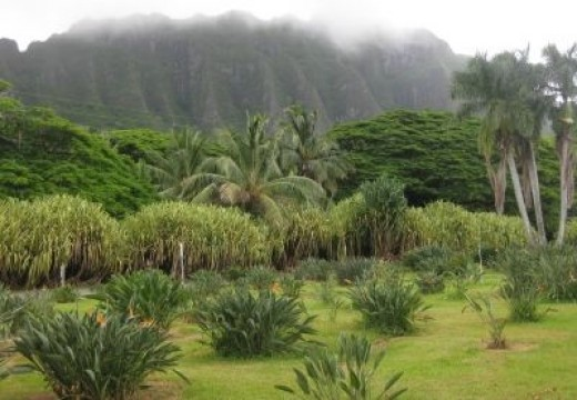 Tropical Farms Garden