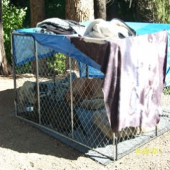 Dog Pens When Safety Matters