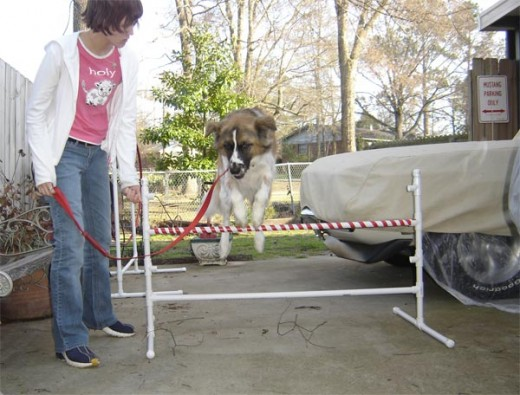 Agility training is a great way to spend time with your dog, exercise him, and build your bond.