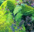 Seattle's Green Growing Moss & the Moss-GMO Connection