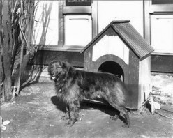 I Found the Right Log Cabin Doghouse for My Two Dogs