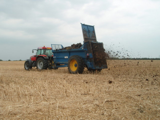 Muck Spreading, near to Luddington in The Brook, Northamptonshire, Great Britain. A farming operation that will be in full swing as the fields are cleared. With inorganic fertilisers virtually unobtainable this year, any green or organic manure is hi