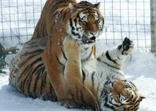 Rosamund Gifford Zoo