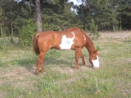 Same Horse Different Side - Notice the white on the face and the white spot starting at the belly