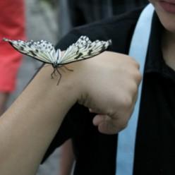 Butterfly Conservatory Niagara Falls