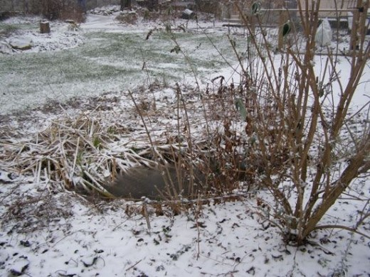 Rain Garden in the Winter