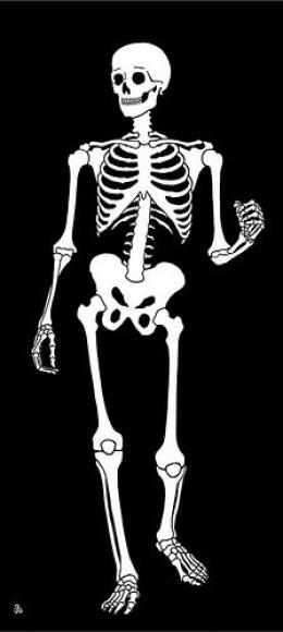 Skeleton, image used under CC license via flickr.com