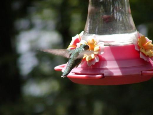 Hummingbird photo at hummingbird feeder