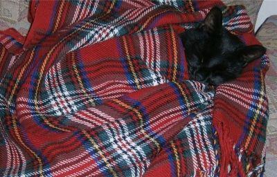 Angus having a nap