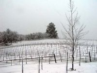 Yes it snows in Sonoma CA