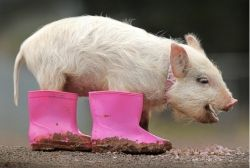 Germaphobia and mysophobia