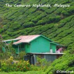 My Cameron Highlands Highlights