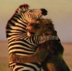 Lion Hugs: Expressions of Love from The King of the Jungle