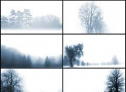 Trees Beyond the Mist by midnightstouch