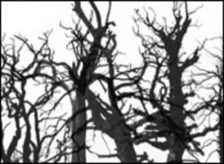 Dead Trees by RubelCreative