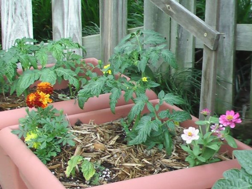 As you can see, I added flowers: marigolds and zinnias.