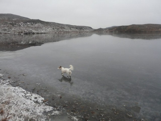 Black Loch, White Dog  Copyright Adam Ward and licensed for reuse under this Creative Commons Licence.