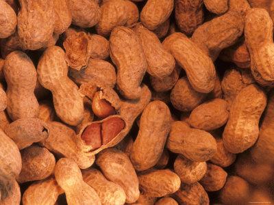 Peanuts in Shell Leguminous Annual Herb